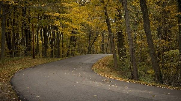 Un camí amb vegetació als costats