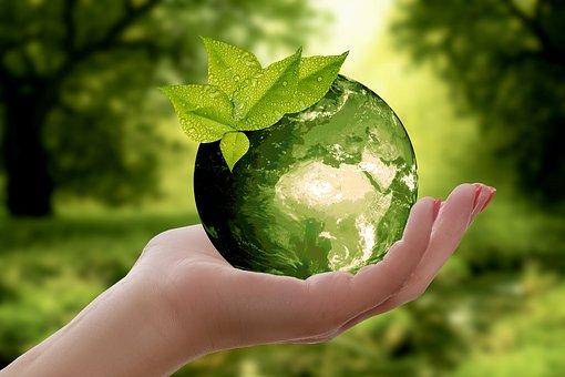 Una mà amb un globus terraqui verd, del qual surt una planta
