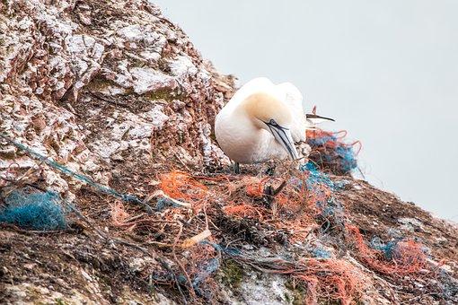Un ocell fent un niu amb material industrial de desfet