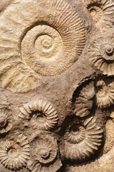 Subvencions per a inversions en la gestió del patrimoni arqueològic i paleontològic