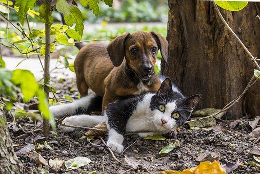 Un gos i un gat jugant en un parc