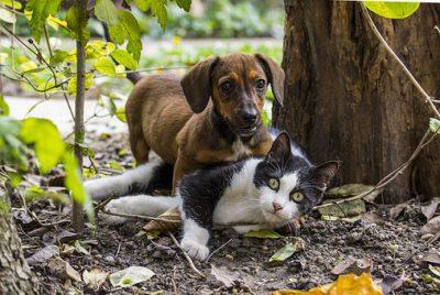 Subvencions per identificar i esterilitzar els animals de companyia 2019