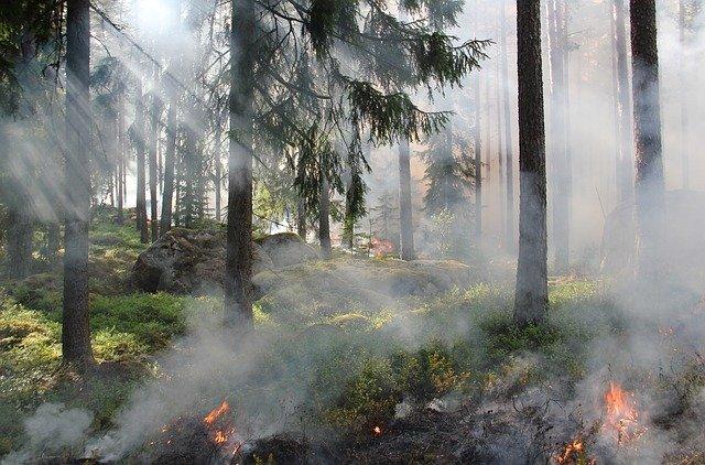 Inici d'un incendi forestal