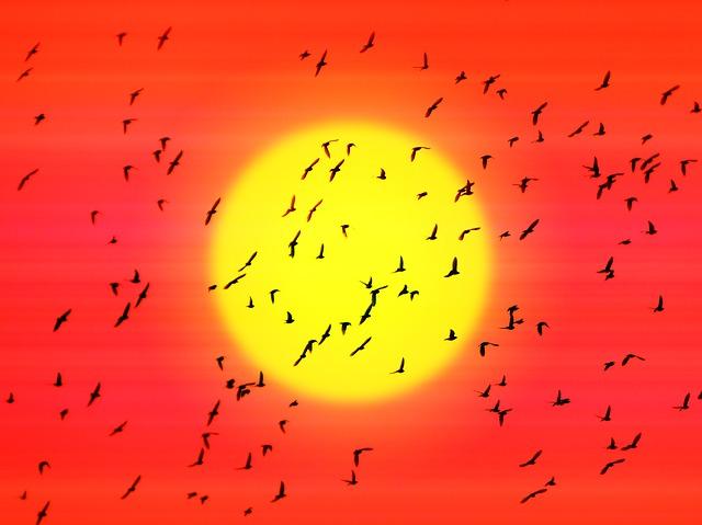 Sol sobre cel roig i aus fent la migració