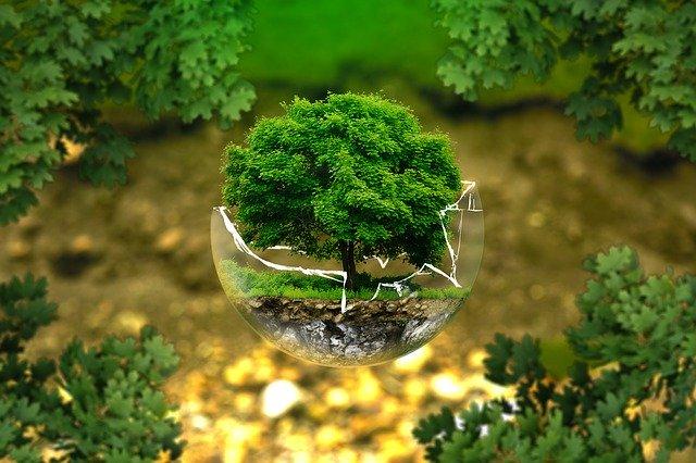 Un arbre embolcallat amb una esfera trencada