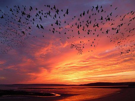 Ocells migrant sobre cel rogenc