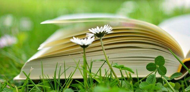 Un llibre obert damunt la gespa i davant dues margarides