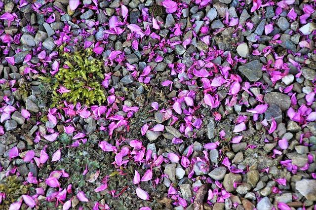 Pedres de jardí amb pètals de flors