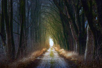 ARP – Ajuts a la gestió forestal sostenible 2020