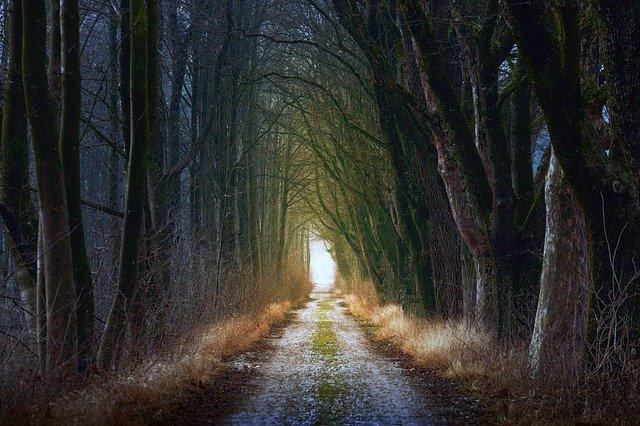 Un camí enmig del bosc