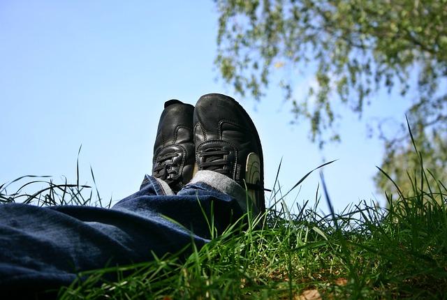 Unes cames estirades damunt l'herba