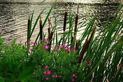 ACA-CUST01 – Subvencions per a recuperació de riberes de rius i zones humides amb acords de custòdia fluvial