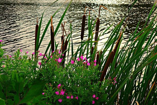 Ribera d'un riu plena de vegetació i flors roses