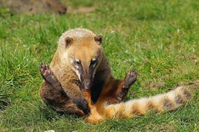 TES – Autorització pel control d'espècies exòtiques invasores i la seva tinença excepcional